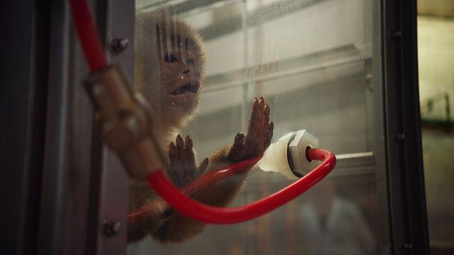 Eksperymentowano na małpach, ale nie na ludziach. Wyjaśniamy metody badawcze niemieckich producentów