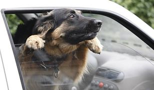 Ratował psa z nagrzanego samochodu. Został oskarżony o zniszczenie mienia