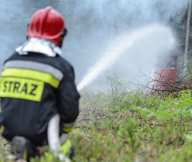 Śląskie. Strażak-piroman podpalał lasy. OSP wydała oświadczenie