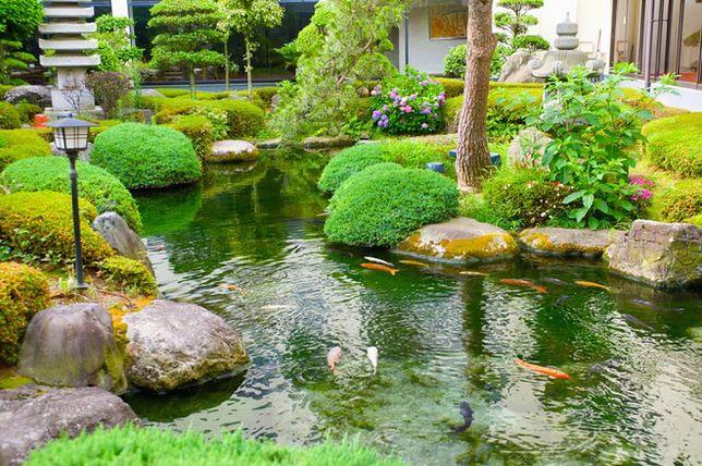 Staw w ogrodzie: kąpielowy czy rybny?