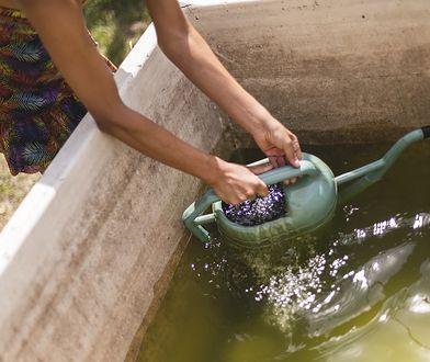 Jak zbierać i wykorzystać deszczówkę w ogrodzie? Oto kilka sposobów