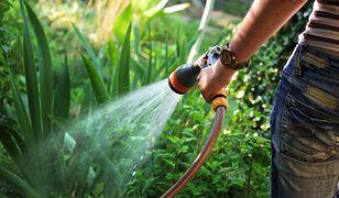 Pistolet do węża ogrodowego pozwala podlewać w komfortowy sposób