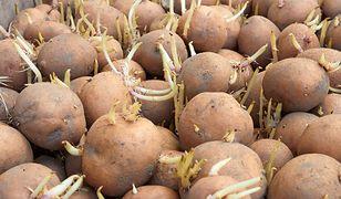 Większość z nas wyrzuca ziemniaki z pędami. To błąd.