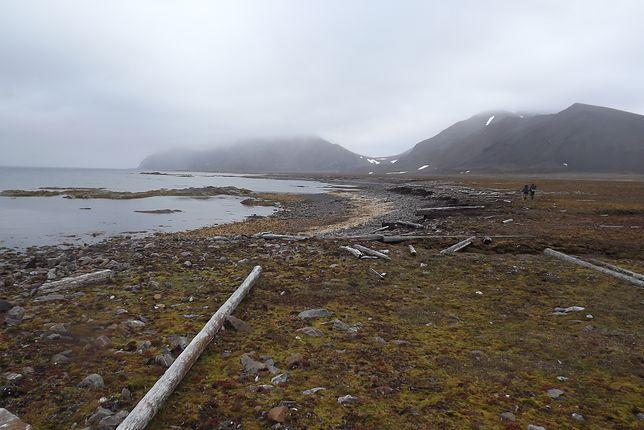 Od setek lat, pnie drzew spławione z syberyjskich rzek lądują na arktycznych wyspach. Dziś ten krajobraz wzbogacany jest bardzo szybko o plastik z Europy i Ameryki Północnej