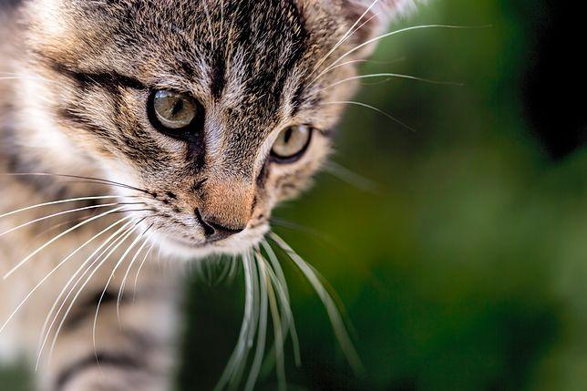 W Omaui chcą wprowadzić zakaz posiadania kotów.