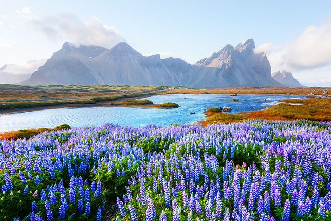 Islandia. Poznaj miejsce, w którym nie ma komarów