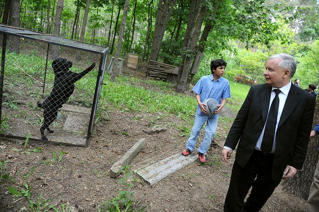 Prezes PiS popiera projekt radykalnych zmian prawa dot. zwierząt