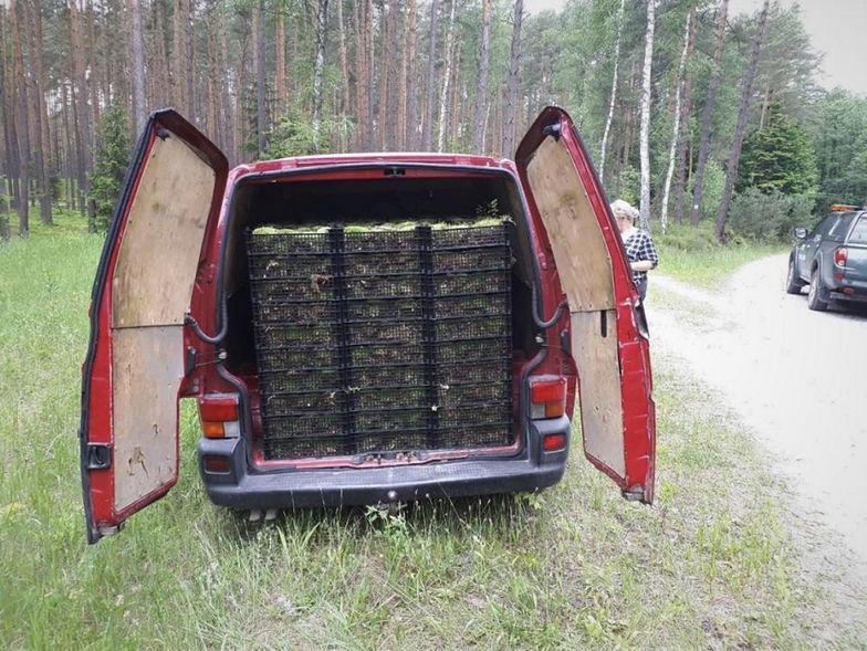 Leśniczy zauważył samochód w lesie. Oniemiał, gdy spojrzał do środka