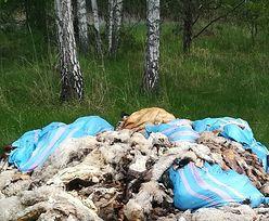 Makabryczne znalezisko w lesie na Śląsku. Czwarty przypadek w ciągu miesiąca!