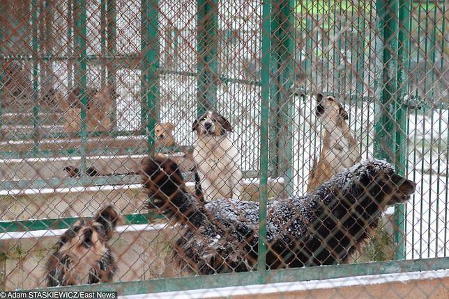 Polskie bezdomne psy tylko dla krajowych schronisk. O wyjeździe do Czech nie ma mowy