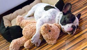 Jaka podłoga najlepsza, gdy masz w domu psa?