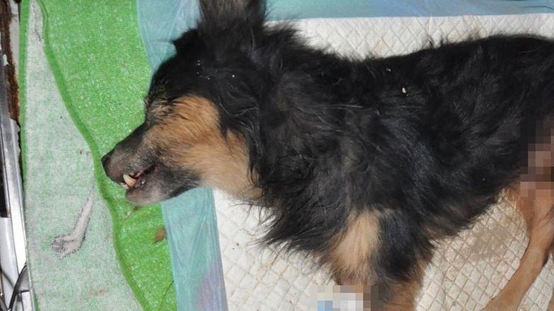 Pies cudem uniknął śmierci. Właściciel zgłosił się na policję