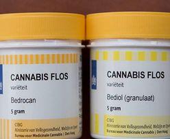 Marihuana. Kto się kwalifikuje do leczenia konopiami?
