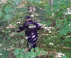 Makabra w czasie grzybobrania. W lesie znaleziono ciało 70-latka