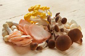 Lecznicze właściwości grzybów. Poznaj sekrety fungoterapii
