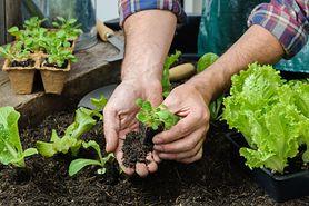 Warzywne dziwolągi - intrygujące i zdrowe