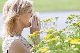 Pyłek kwiatowy - właściwości, przeciwwskazania, dawkowanie