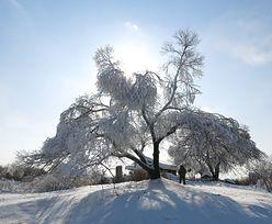 Zima wraca do Polski. IMGW ostrzega