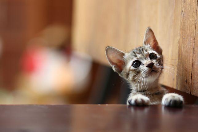 Włodawa. Pijany Czech wrzucił kotka do kojca psa. Zwierzę nie przeżyło