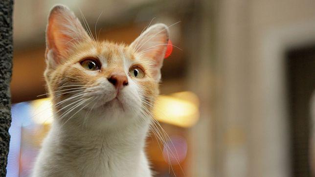 """Koty, koteczki, kiciusie. Na co iść do kina? Na """"Kedi - sekretne życie kotów""""!"""