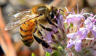 Greenpeace: praca pszczół w Polsce warta jest ponad 4 mld zł