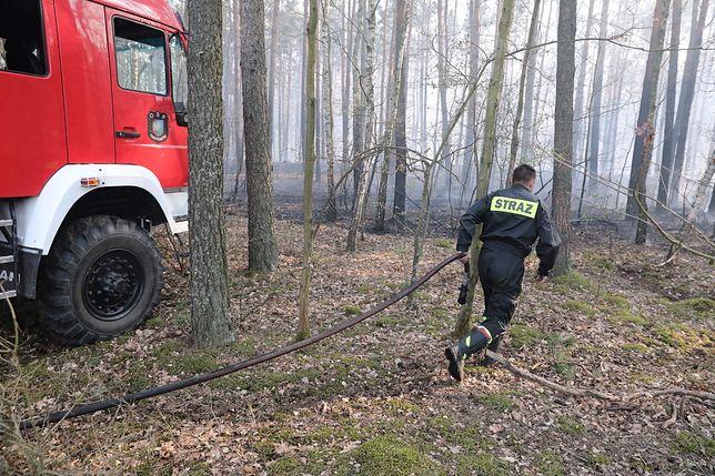 Mazowiecka Straż Pożarna informuje o dużym zagrożeniu wystąpienia pożarów w lasach