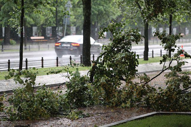 """Ostrzeżenie dla Warszawy. """"Lepiej nie parkować aut pod drzewami"""""""