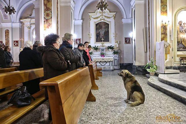 W jednym z olsztyńskich kościołów będzie można adoptować psa