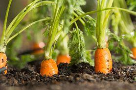 Warzywa i owoce, które zmniejszają ryzyko raka jelita grubego