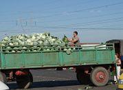 Na rynku hurtowym w Broniszach towaru nie brakuje, ceny nie wzrosły