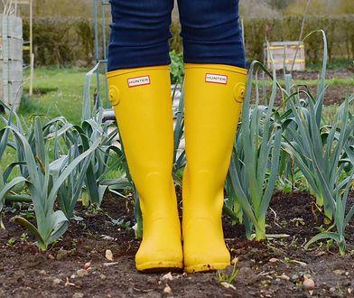 Porządki w ogrodzie - co warto zrobić w marcu?