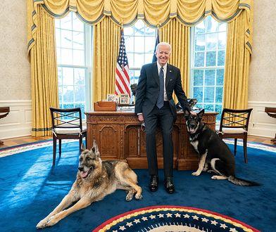 USA: incydent w Białym Domu. Psy Joe Bidena odesłane