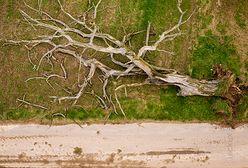 """Sułoszowa. Zawaliło się """"drzewo wisielców"""""""