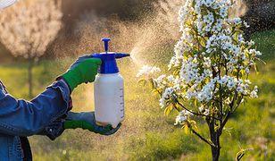 Wiosna w ogrodzie. Jak rozpoznać i szybko pozbyć się upartych szkodników?