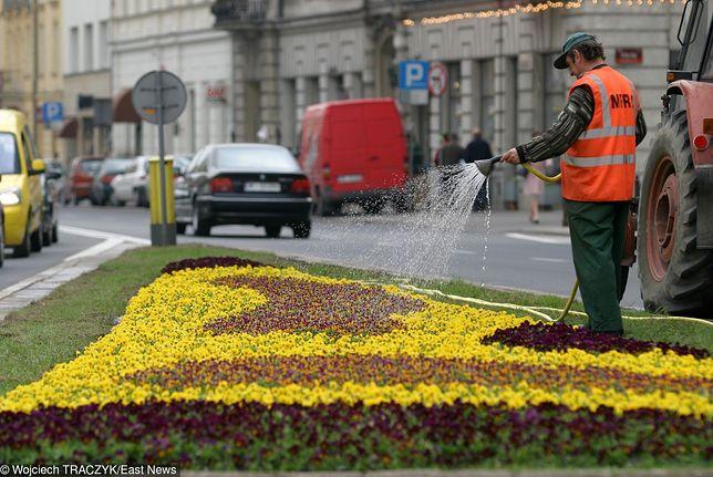 """Legnica. """"Stał w deszczu i podlewał kwiaty. Bezmyślne"""""""