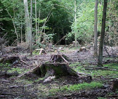 W 2012 roku, w obronie lasu, na teren kopani wdarło się 600 demonstrantów. (Zdjęcie ilustracyjne)