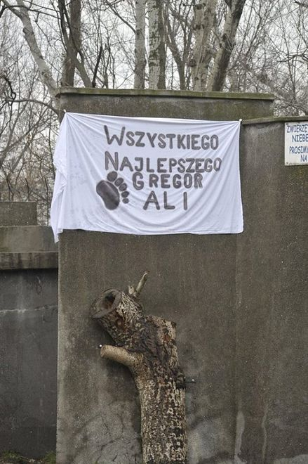 """Urodziny niedźwiadków w warszawskim ZOO. """"Najbardziej spodobał się udziec wołowy"""" [GALERIA]"""