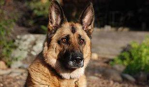 Patent na opodatkowanie psów
