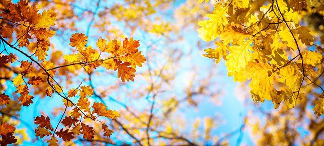 Pogoda w weekend zachwyci wysokimi temperaturami i bezchmurnym niebem. Taka aura może się utrzymać do końca przyszłego tygodnia.