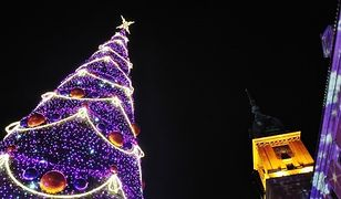 Gdzie będzie można kupić choinkę na Święta? Znamy pierwsze lokalizacje