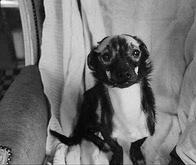 Zbiórka pieniężna na nagrodę za wskazanie zabójcy psa Franka.