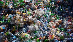 Plastik jest wszędzie - także w organizmach najmłodszych
