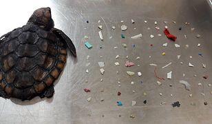 Stworzenie wielkości dłoni połknęło aż tyle odpadów