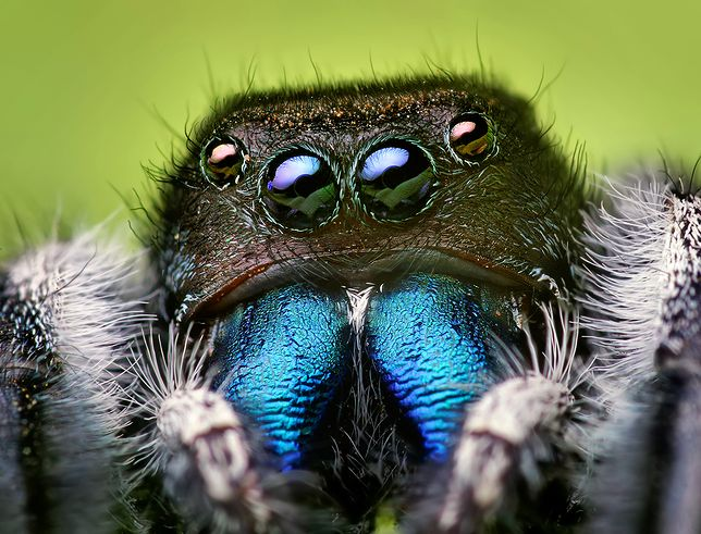 Okazuje się, że lęk przed pająkami ma naukowe uzasadnienie