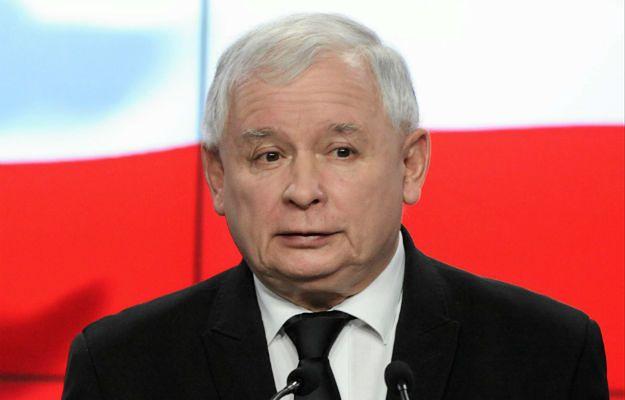 Przepisy ws. wycinki drzew do zmiany. Jarosław Kaczyński i PiS rozpoczynają przygotowania do wyborów samorządowych