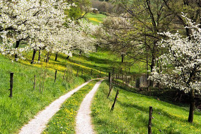 Pogoda na dziś - piątek 26 kwietnia. Ciepło i słonecznie w całej Polsce.