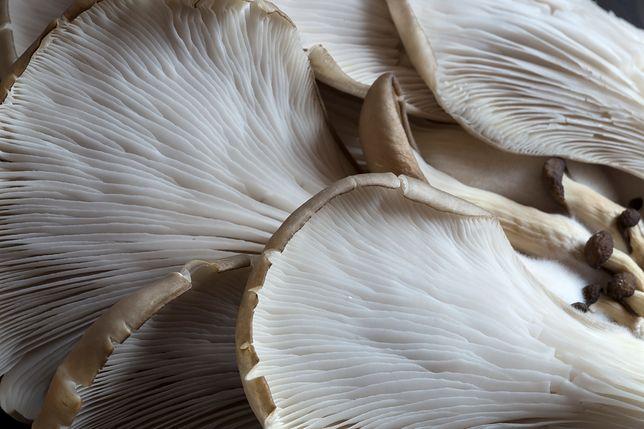 Boczniaki są bogate w  białko, które jest przyswajalne w 70 proc. oraz wiele nienasyconych kwasów tłuszczowych. Przepisy z boczniakami