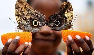 Najlepsze zdjęcia według Reutersa - świat nigdy nie przestanie zaskakiwać