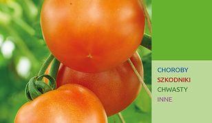 Program Ochrony Roślin Warzywnych uprawianych w polu 2019