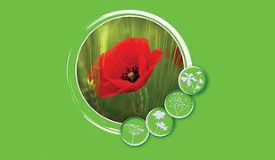 Atlas chwastów roślin rolniczych, sadowniczych i warzywniczych